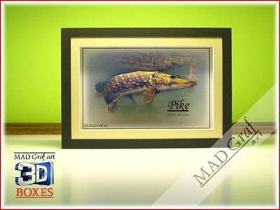 PIKE ON THE FLY fish fishing art 3D effect box fishing gifts MAD Graf art