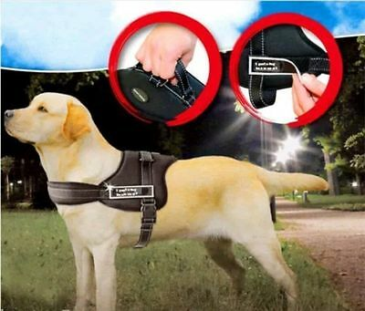 Sports Dog Harness Set Extra Strong Adjustable Harness UK SELLER FREE P &  P