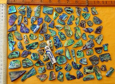 New Zealand Paua / Abalone Shell Pieces, 100 grms / 3.5 oz's