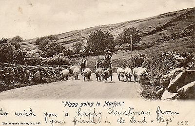 Old Wrench Postcard Posted Belfast 1902 - Piggy Going To Market