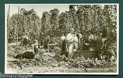 HOP PICKING,MEASURING THE PICK,BY SWEETMAN, vintage postcard