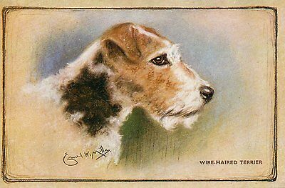 OLD SALMON POSTCARD 1910's - WIRE HAIRED TERRIER - DOGS