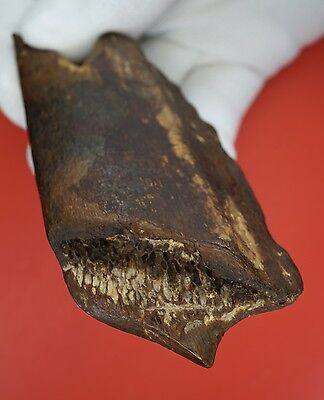 Upper Palaeolithic, Red Ochre Stained Organic/Bone Dihedral Burin