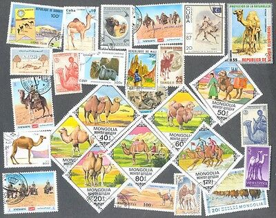 Camels- 25 all different stamps collection-