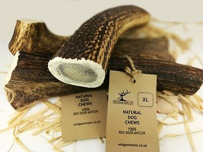 Wild Horn Chews For Dogs Small Medium Large XL Stag - 100% Natural - Calcium