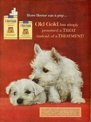 OLD GOLD Cigarette Ad c 1950 WESTIE Puppies White West Highland Terrier Dogs