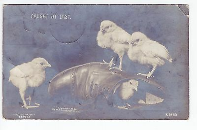 1908 RPPC Indianapolis, IN Postcard - Caught at Last - Chicks - Posted