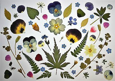Pressed Flowers & Leaves Over 40 Assorted For Card Making, Craft, Resin & Art
