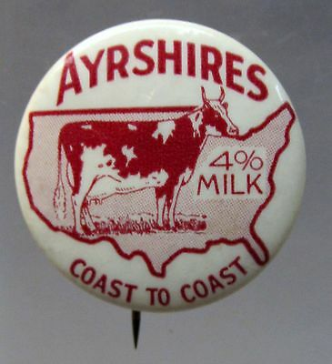 AYRSHIRES 4% MILK COAST TO COAST dairy cow celluloid pinback button  *