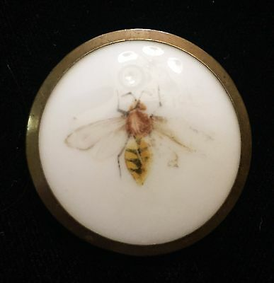 Gorgeous Lrg Antique Pictorial Porcelain Ceramic Button  With Insect Bee