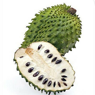 Soursop Seeds Organic Medicinal Antimicrobial Agent  Fruit Annona Thorn 20Pc