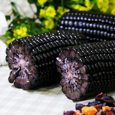 Black Corn Seeds Fruit Corn Seeds Fruits Vegetables Corn Sweet Nutritious Corn