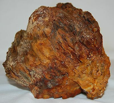 Old Stock Vintage Display Specimen Piece of Cycad Petrified Forest Wood 5+ lbs.
