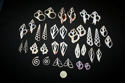 Cut sliced seashell selection - 17 pairs/34 pieces.