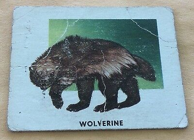 1951 Topps Animals Of The World #117 Wolverine