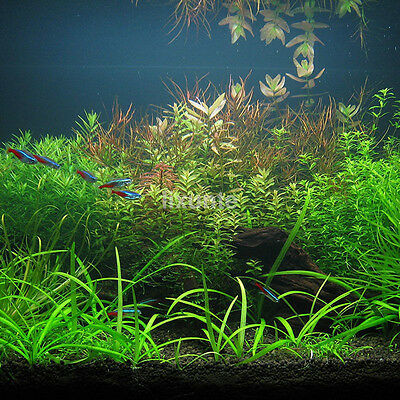 1000x Bulk Aquarium Oxygen Mixed Water Plant Grass Seeds Aquatic Fish Tank Decor
