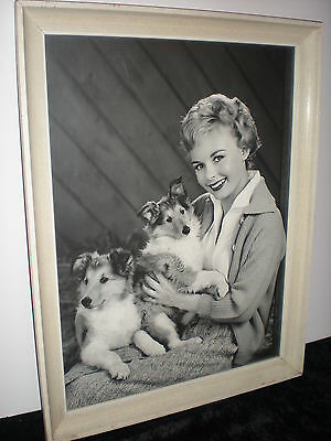 Lady 2 Collie Puppy DOG Very Large Framed Studio Photo 21 x 16