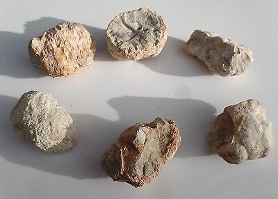 6 Australian Thunder Eggs mineral specimens lapidary rough collection - lot 2