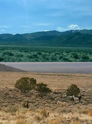 50 Acs Great Cowboy Land Nevada, Financed From $154.07 A Month, Road, Mountains