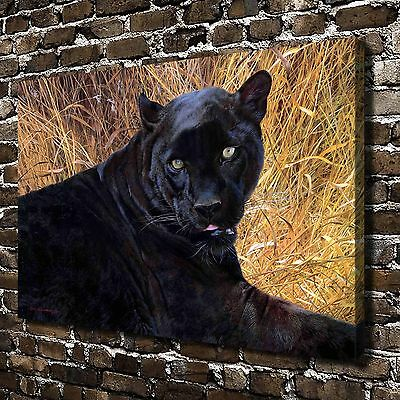 Animal Black Panther Paintings HD Print on Canvas Home Decor Wall Art Paintings