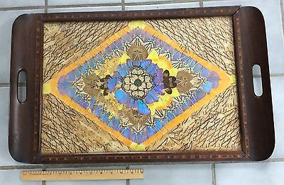 """Wooden Tray Decorated Entirely in Butterfly Wings 25"""" X 15"""" Brazil"""