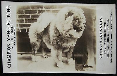 Chow Chow Champion Yang-Fu King Bloodline Real Photo Dog Kennel Advertising Card