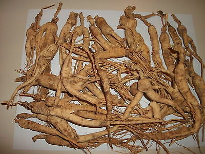 Cheap Super Sale WIILD  GINSENG ROOTS 1PD 448 GRAMS VERY OLD With LONG NECKS