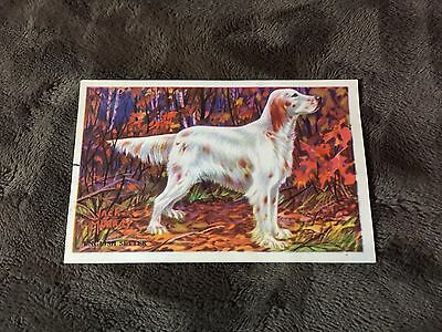 Gordon Bread English Setter Card