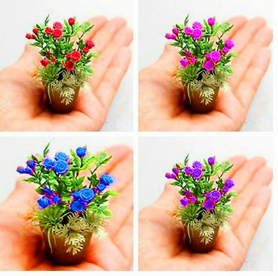 RARE ! 100 Seeds/ Packing - New Rose Seeds 4 Different Colors