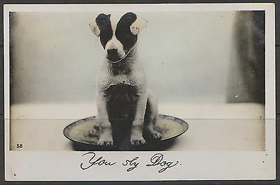 1909: 'YOU SLY DOG': RP PPC JACK RUSSELL TERRIER DOG Unsent