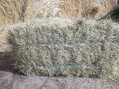 2017 Top quality horse meadow hay