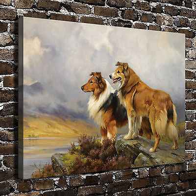 Rough Collie Dog Animal Paintings HD Print on Canvas Home Decor Wall Art Picture