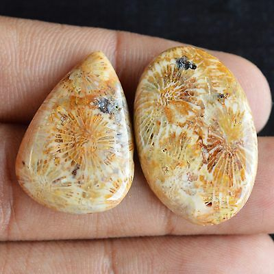 2 Pcs Fossil Coral Cabochon Gemstone,Jewelry Gemstone,Genuine Coral Stone#15096