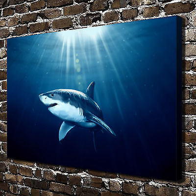 Ocean Animal Shark Paintings HD Print on Canvas Home Decor Wall Art Pictures