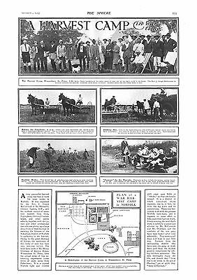 1915 Antique Print - Ww1- A Harvest Camp In Wartime