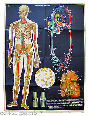 Rare Vintage Antique Anatomy Russian Educational Poster - Human Blood System