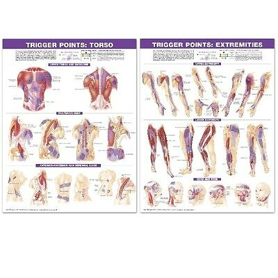 Trigger Points - 2 Poster set - Torso and Extremities