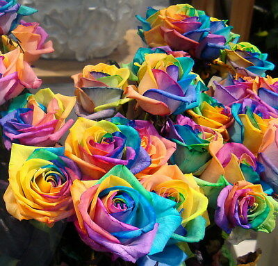 China Multicolour Lover Rose Seed Rare Beautifully Garden Flower Seed 100 PCS