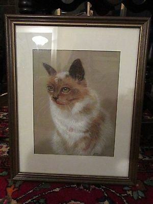 Vintage Cat Kitty Drawing Framed, NICE!