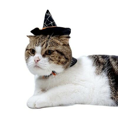 Pet Halloween Hat Wizard Cap Collar Dog Cat Festival Party Costume Fancy Dress