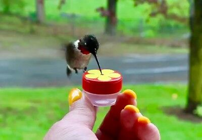 Single HUM-Button™ Mini Hand Held Hummingbird Feeder NIFTY THRIFTY BUTTON