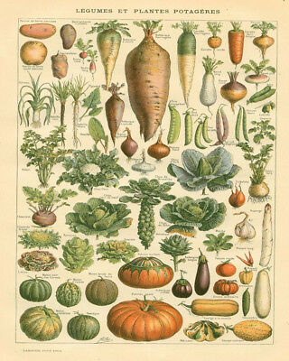 Veg Vegetables Kitchen  - Vintage Art Print Poster - A1 A2 A3 A4 A5