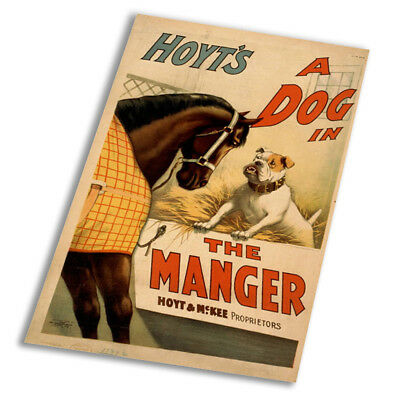 Hoyt's A Dog In The Manger Vintage - Vintage Art Print Poster - A1 A2 A3 A4 A5