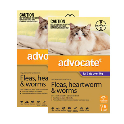Advocate for Cats over 4kg (12 pipettes) Cat Cats Pet Pets