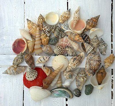 150g Seashell Mix Small Assorted Shell Selection Pack Beach Seaside Decorative