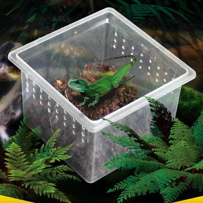 Transparent Vented ABS Box Insect Reptile Transport Breeding Feeding Hatching