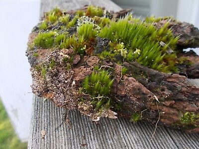 MOSS CENTERPIECE. Absolutely gorgeous!!!! ONE ONLY!!!!! Terrarium.