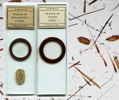 J.T. Norman Butterfly Scales Microscope Slides