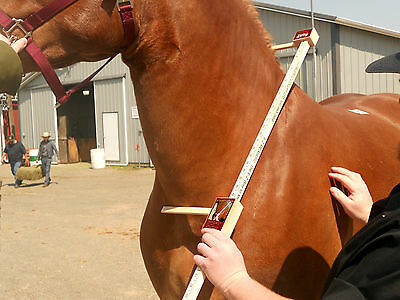 Equine Collar Measuring Stick (for horses!) Amish Made In Ohio USA