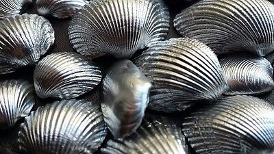 Sea Shells Beach Wedding Decoration Clam Craft SeaShells 80g Nickel Chromium